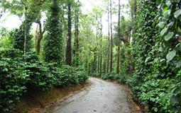 BreathtakingIndia Exclusive: Coorg Tours | Karnataka Tours - Coorg sightseeing Tour One Day