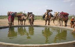 BreathtakingIndia Exclusive: Jaisalmer Tours | Rajasthan Tours - HALF DAY JEEP & CAMEL SAFARI TOUR